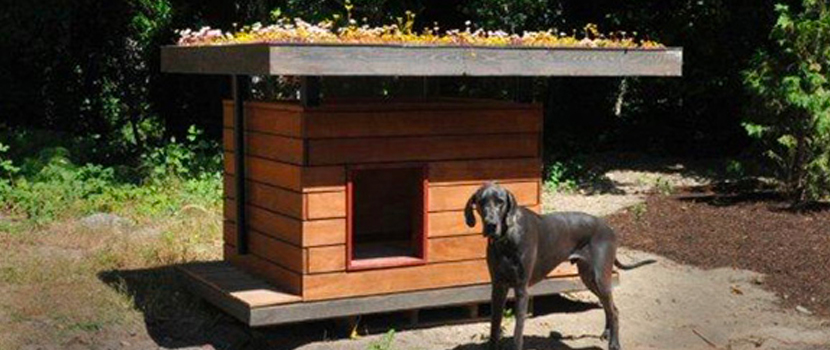 An Eco-Doghouse Made from Recycled Building Materials